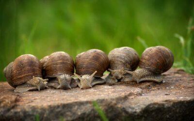 I Rzeczenicki wyścig ślimaków na zakończenie obchodów Gminnego Dnia Dziecka